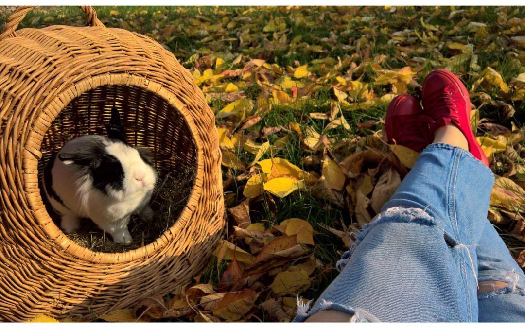Sposoby na jesienną metamorfozę domu
